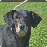 Adopt A Pet :: **LUCKY** MEET AUG 27TH! - Mukwonago, WI