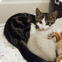 Adopt A Pet :: Lola - Richmond Hill, ON
