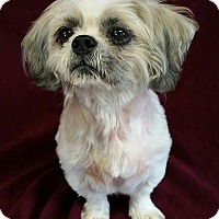 Adopt A Pet :: Aslan Putnam - Urbana, OH