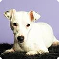 Adopt A Pet :: Daisy 1B24 - Columbus, GA