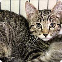 Adopt A Pet :: Pyramus - Sarasota, FL