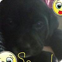 Adopt A Pet :: Sparky - Aurora, IL
