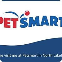 Adopt A Pet :: Snorlax - Lakeland, FL