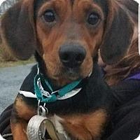 Adopt A Pet :: Betty - Breinigsville, PA