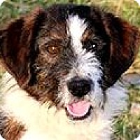 Adopt A Pet :: MICKEY(OUR