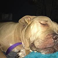 Adopt A Pet :: Ellie - Rockford, IL