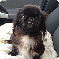 Adopt A Pet :: Buddy - Marietta, GA