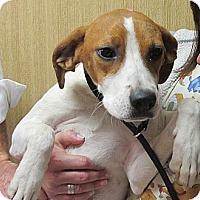 Adopt A Pet :: Grace - Brattleboro, VT