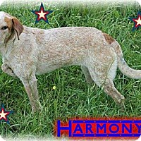 Adopt A Pet :: Harmony - Hancock, MI
