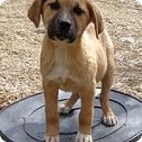 Adopt A Pet :: Cherry - Staunton, VA