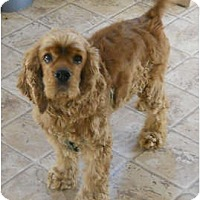 Adopt A Pet :: Brutus - Tacoma, WA