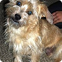 Adopt A Pet :: COOPER - Mission Viejo, CA