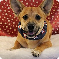 Adopt A Pet :: *Corky - PENDING - Westport, CT