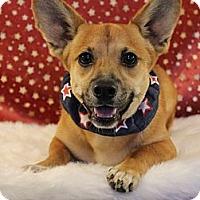 Adopt A Pet :: *Corky - PENDING - Westport, CT