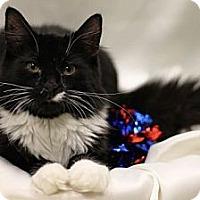 Adopt A Pet :: Oreo - Alexandria, VA