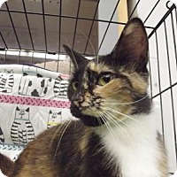 Adopt A Pet :: Bridget - Kelso/Longview, WA