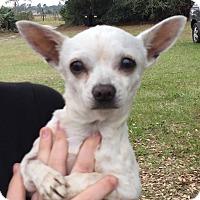 Adopt A Pet :: Puppy - geneva, FL