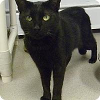 Adopt A Pet :: Divinchi - Hamburg, NY
