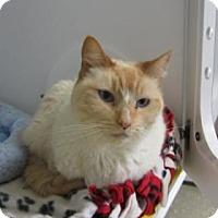 Adopt A Pet :: Seraphina - Kingston, WA