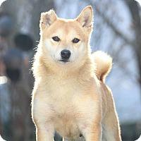 Adopt A Pet :: Rin - Manassas, VA