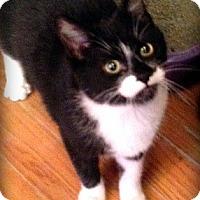 Adopt A Pet :: Georgia & Simon - Roseville, MN