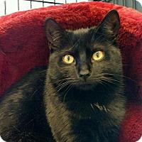 Adopt A Pet :: Ebony - bloomfield, NJ