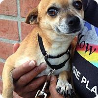 Adopt A Pet :: Pinocchio - Redondo Beach, CA