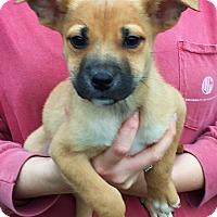 Adopt A Pet :: Oscar - Pewaukee, WI