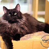 Adopt A Pet :: Sherman - Lyons, NY