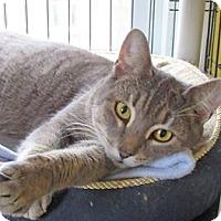 Adopt A Pet :: Stevie - Devon, PA