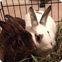 Adopt A Pet :: Wizzer & Rolly - Conshohocken, PA