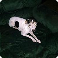 Adopt A Pet :: Tigger - Kendall, NY