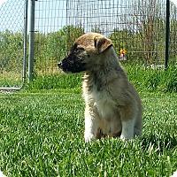 Adopt A Pet :: Skyler - Plainfield, IL
