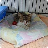 Adopt A Pet :: Bell - Fountain Hills, AZ