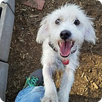 Adopt A Pet :: SNOOP - Phoenix, AZ