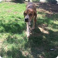Adopt A Pet :: Rusty - Gadsden, AL