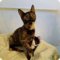 Adopt A Pet :: MSF6 - Alamo, CA