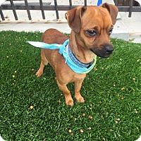 Adopt A Pet :: Leroy - Redondo Beach, CA