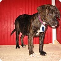 Adopt A Pet :: Daphne - KANNAPOLIS, NC