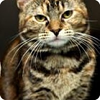 Adopt A Pet :: Sassy - Hanna City, IL