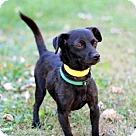 Adopt A Pet :: PETER PAN-FOSTER NEEDED