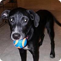 Adopt A Pet :: Polly - Gilbertsville, PA