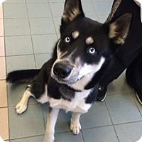 Adopt A Pet :: Pierre - Woodbridge, VA