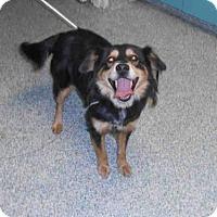 Adopt A Pet :: *JENNY - Long Beach, CA