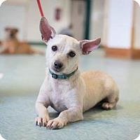 Adopt A Pet :: Kiwi - Bellbrook, OH