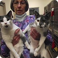 Adopt A Pet :: Emma - Chambersburg, PA