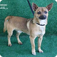 Adopt A Pet :: *MALCOLM - Hanford, CA