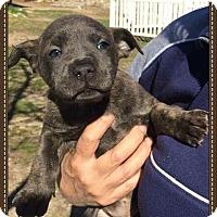 Adopt A Pet :: Lorissa - Alta Loma, CA