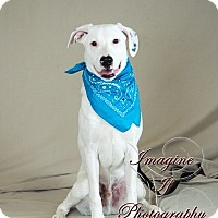 Adopt A Pet :: Aspen - Newcastle, OK