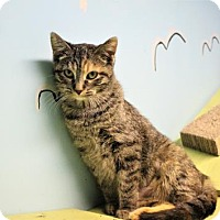 Adopt A Pet :: Haruko - West Des Moines, IA